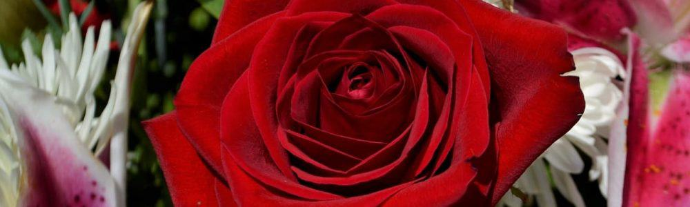 funeral red rose