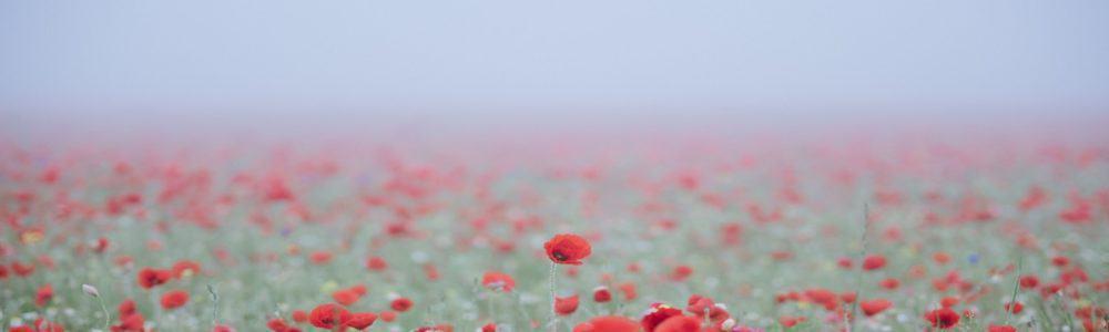 Flower Field Red
